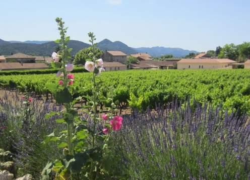 Provence garden x webpage