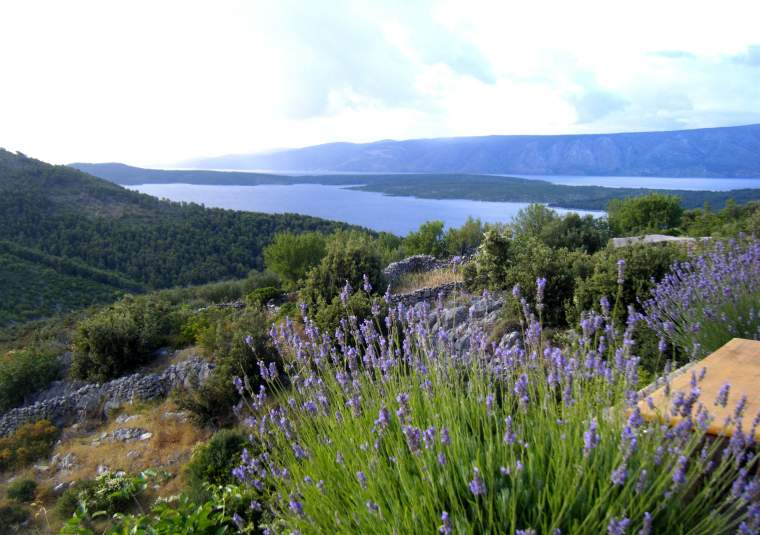 Lavender on hvar